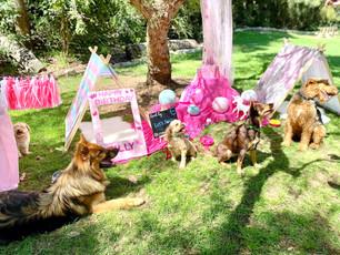 Pawsome Pastel Princess Themed Dog Birthday Party