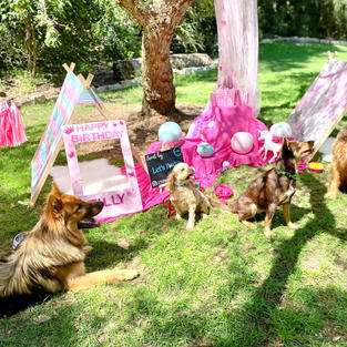 Pawsome Pastel Princess Dog Party Theme