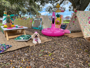 Tropical Themed Dog Party