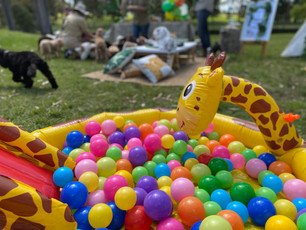 Ball Pit Fun At Dog Party