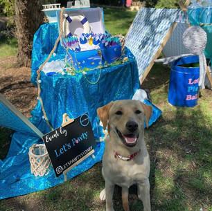 Dog Birthday Party, Under The Sea