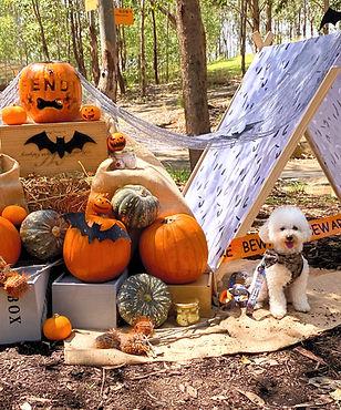 Halloween Theme set up
