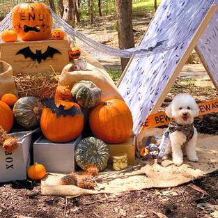 Custom Themed Dog Party