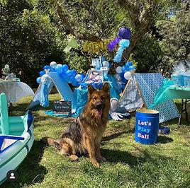 Dog-themed-birthday-party