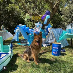 Under The Sea Dog Birthday Party