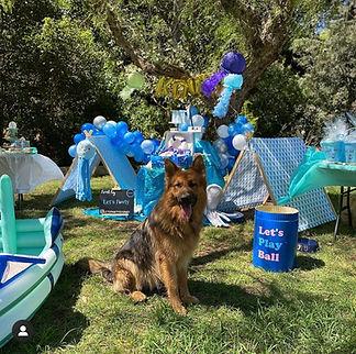 Dog_at_birthday_party