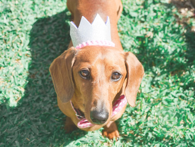 5 Reasons To Have A Dog Party
