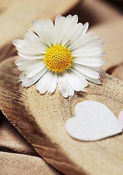 daisy-2313966_960_720_edited.jpg