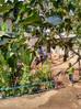 Begrünung des Schulgelände in Bussa