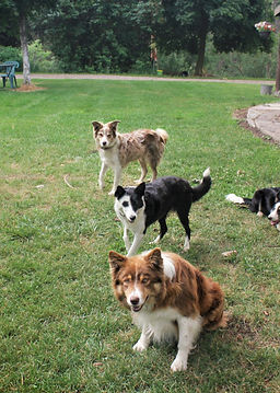 Mission Falls Ranch | Working Border Collies & Joan Mason