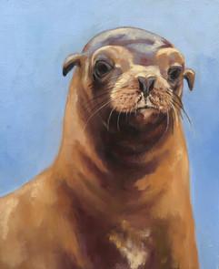 Sea Lion, 2019