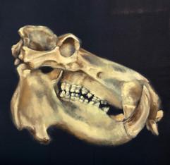 Hippo Skull, 2020