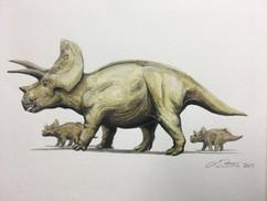 Triceratops, 2018