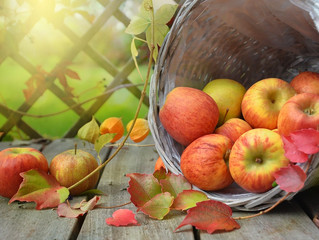 Apples boost brain health, mice study suggests