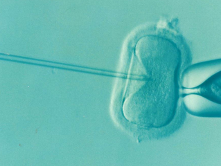Frozen eggs and sperm storage limit increased to 55 years