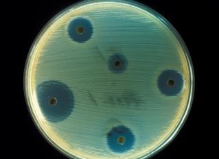 Why antibiotics are precious