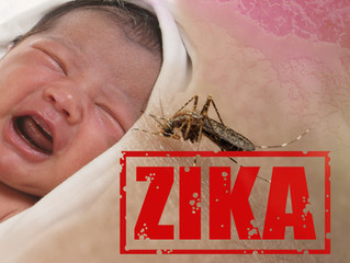 Zika virus may reach Europe this summer