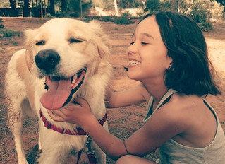 Pet dogs 'may help children avoid asthma'