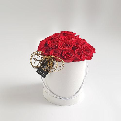 Box 24 Rosas