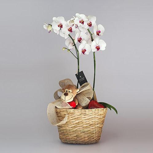 Orquídea Sweet Love