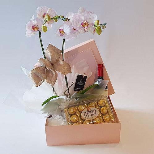 Orquídea Caixa Especial