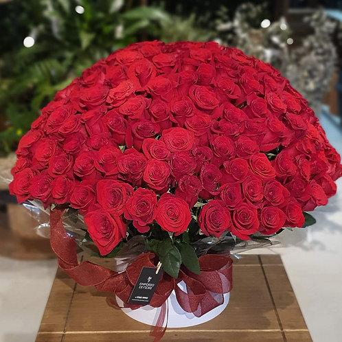 Arranjo 220 Rosas Importadas