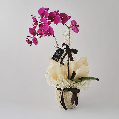 Orquídea Phaleanopsis 2 Hastes