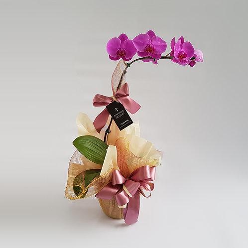 Orquídea Roxa Embalada Tela