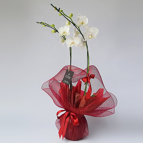Orquídea 2 Hastes Tela