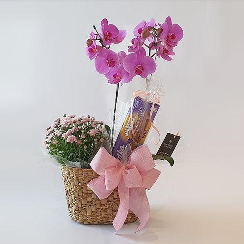 Orquídea Cestinho