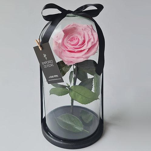 Everlasting Rose Rose