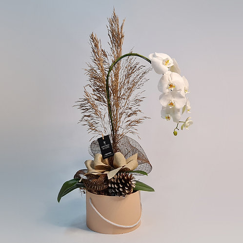 Orquídea Natal
