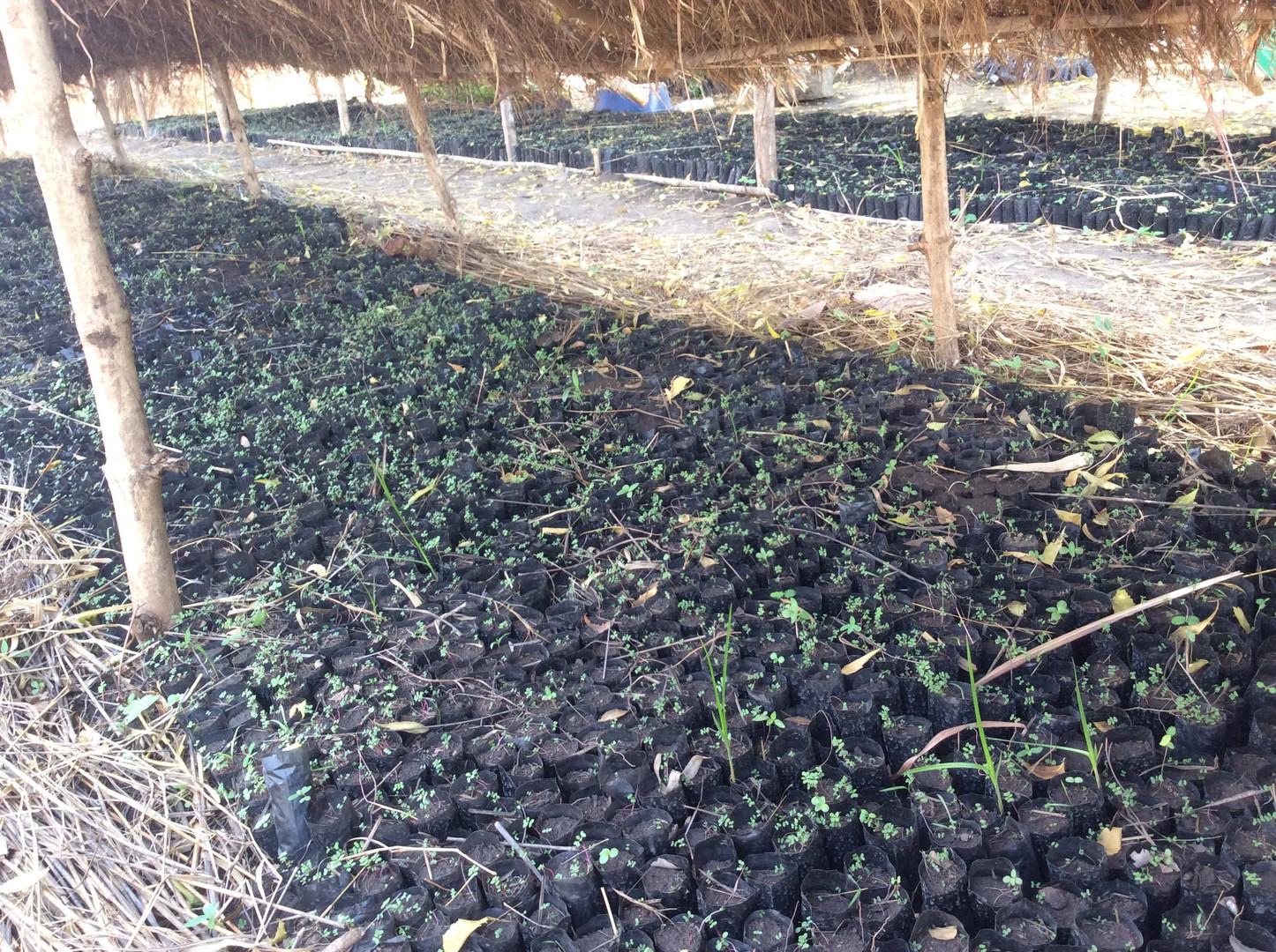 Agriculture 2.jpeg