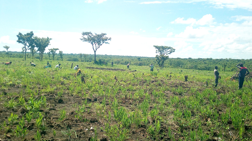 Agriculture 8.jpg