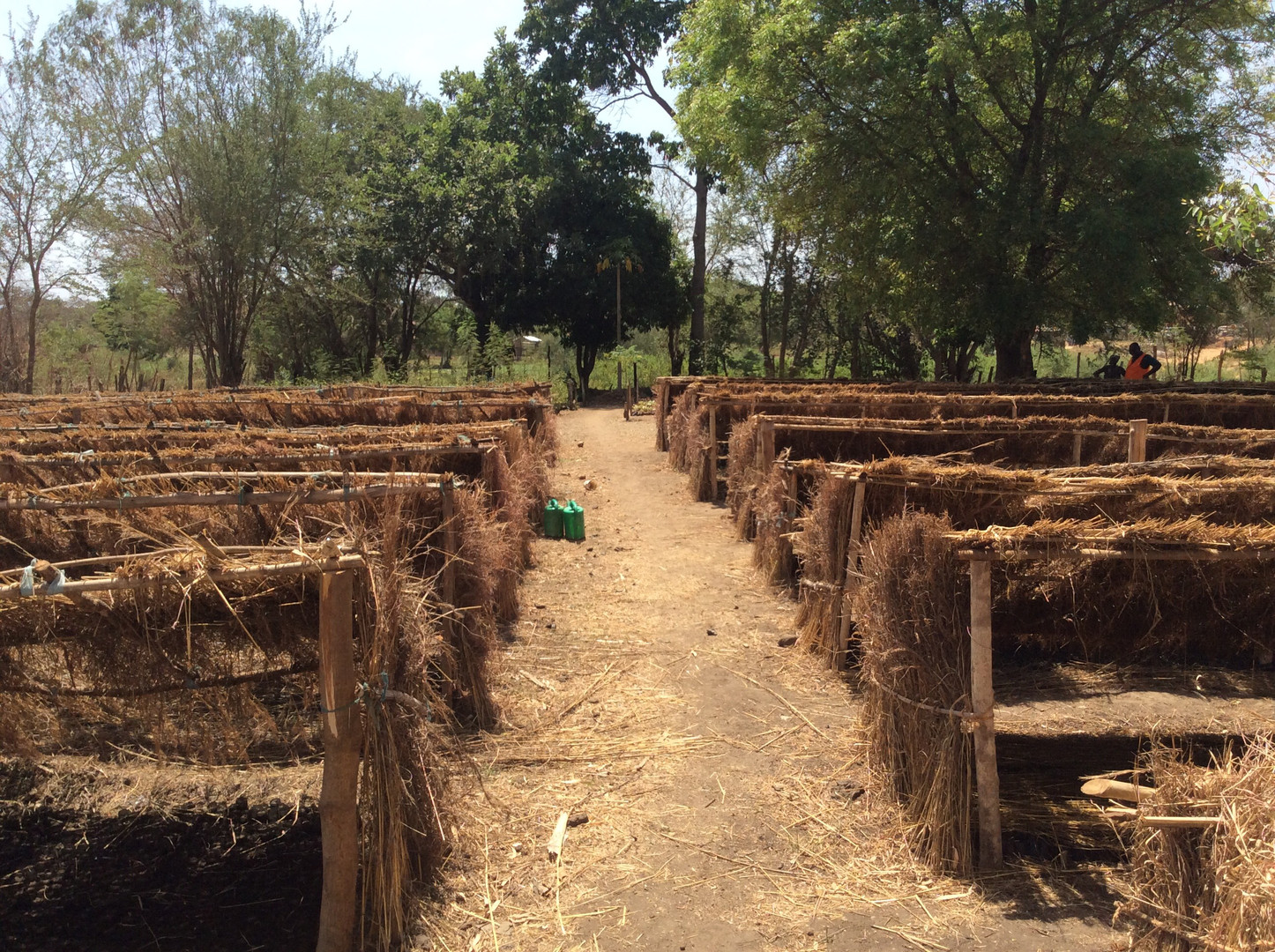 Agriculture 6.jpeg