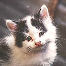 TNR-stray-paws-animal-heaven-about-02_ed
