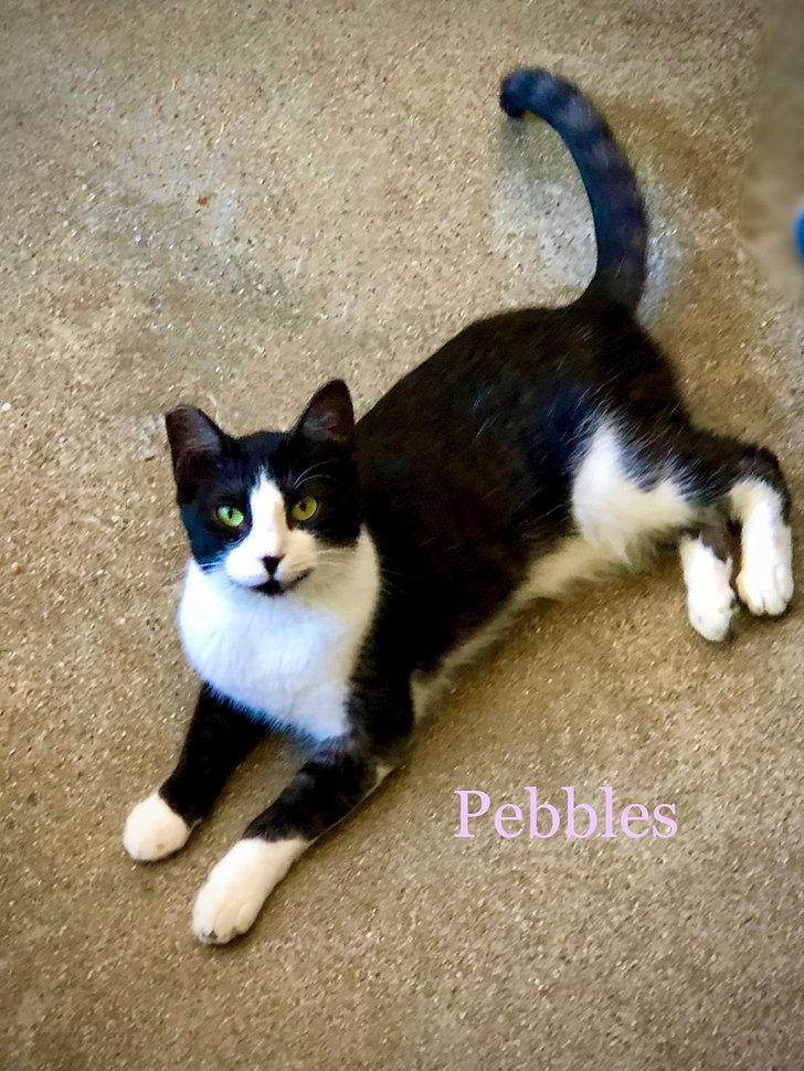 Pebbles 2.jpeg
