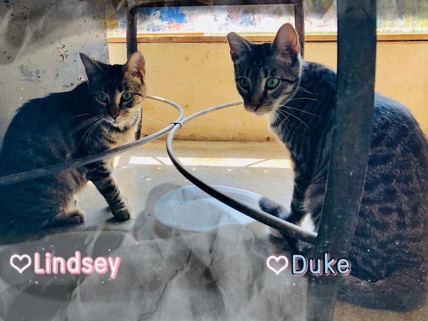 Duke & Lindsey3.jpeg