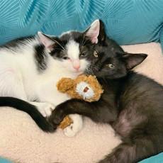 Oreo & Kiki