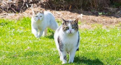 cat 2 FCCR.jpeg