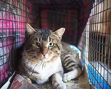 Happy cat in a trap.jpg