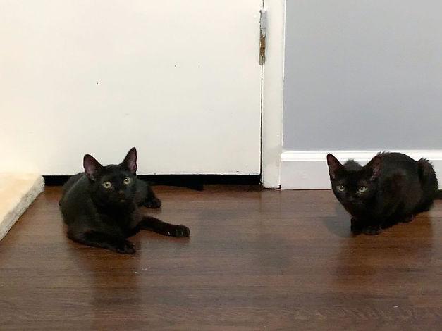Benny & Joon 5.jpeg