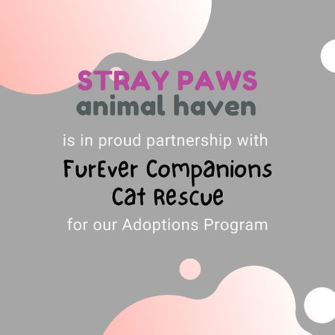 Stray Paws Animal Haven is in Proud partnership with FurEver Companions Cat Rescue on our