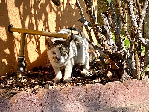 Provide 50 microchips for 50 community cats