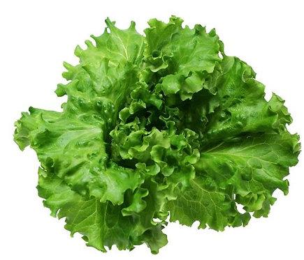 綠皺葉萵苣