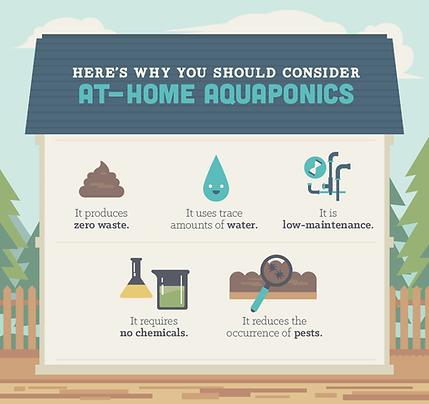 why-consider-at-home-aquaponics-002.png