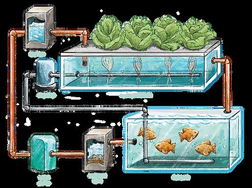 Aquaponics1.png