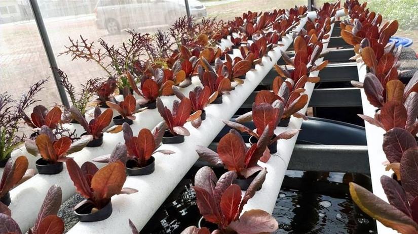結合魚菜共生管耕種植