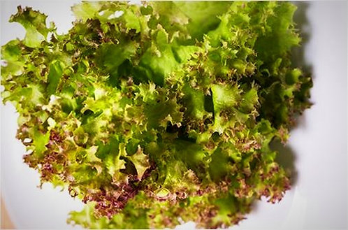 紅皺葉生菜
