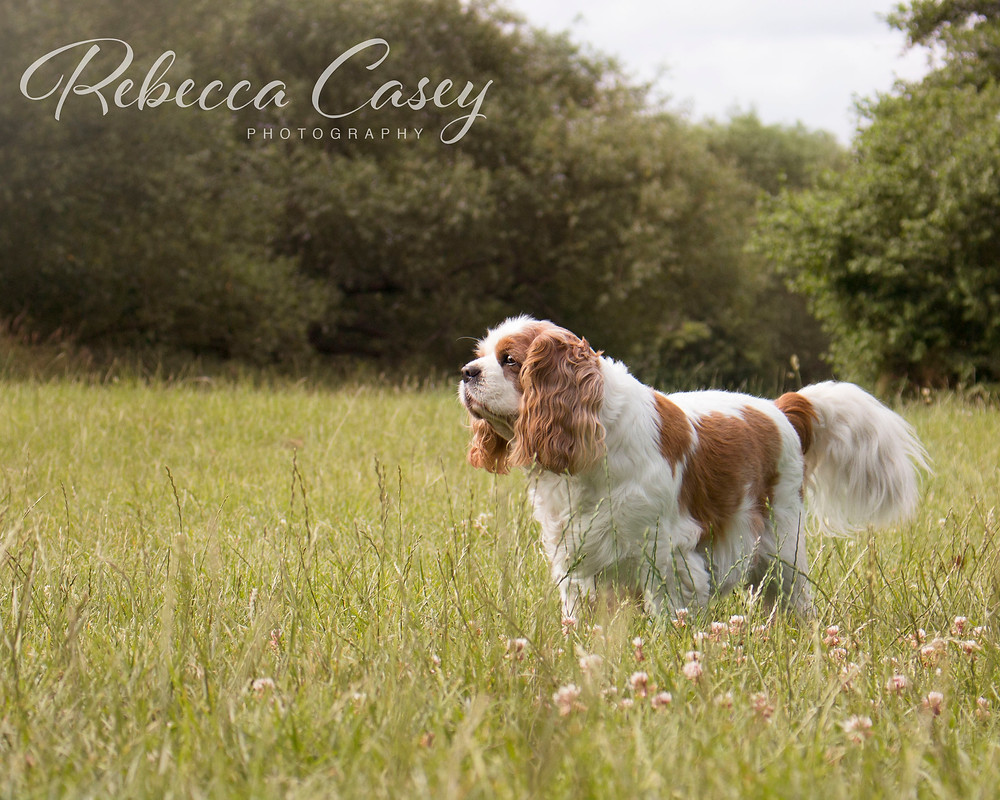 Wiltshire Wedding Photographer | Rebecca Casey Photography | Rebecca Trueman | Melksham, Wiltshire, South West UK